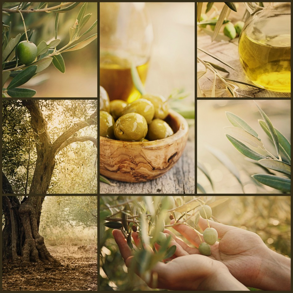 olive collage